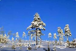 Beautiful Swedish scene