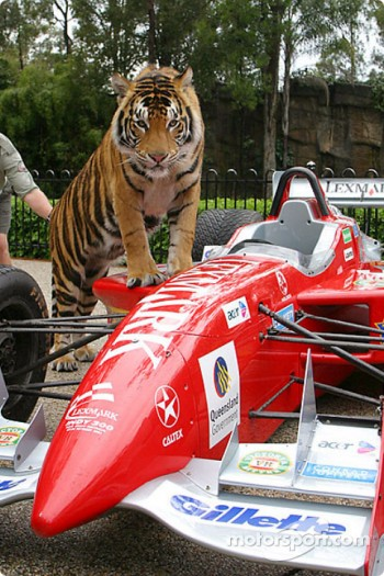 A tiger looks at a race car