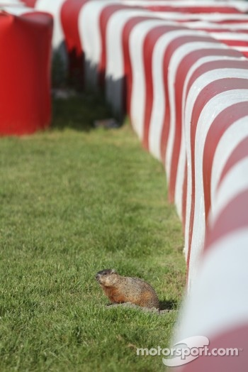 Another visitor to the track