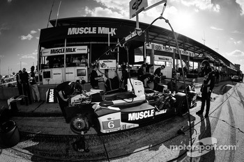 #6 Muscle Milk Pickett Racing HPD ARX-03c Honda