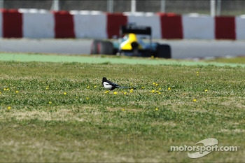 Giedo van der Garde, Caterham CT03 passes a bird in the grass