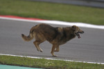 A dog runs across the track