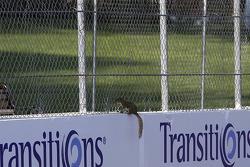 A racing squirrel