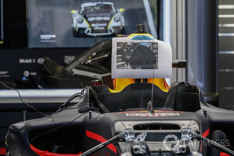 Фото чорного кота на боліді Red Bull Racing RB13
