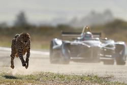 Гепард проти машини Формули Е