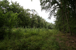 The route of the old circuit now re-planted with trees