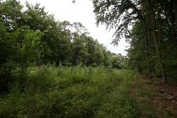 El trazado del viejo Hockenheim comido por las plantas