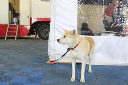 Un cane nel paddock