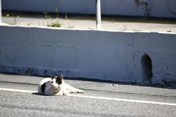 Un chat se repose dans la ligne des stands