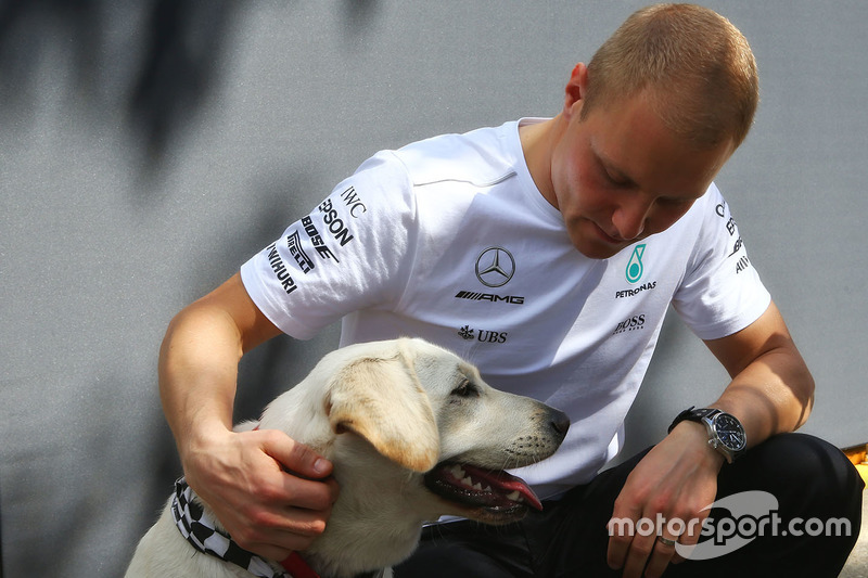 Valtteri Bottas, Mercedes AMG F1 W08 con un perro