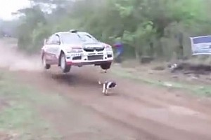 Other rally Últimas notícias VÍDEO: Cachorro invade pista de rali e escapa da morte
