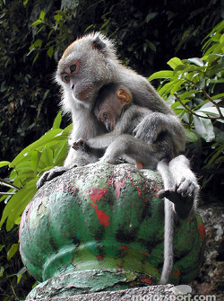 Monkey with baby in Batu cave
