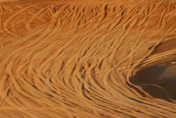 Desert ambiance