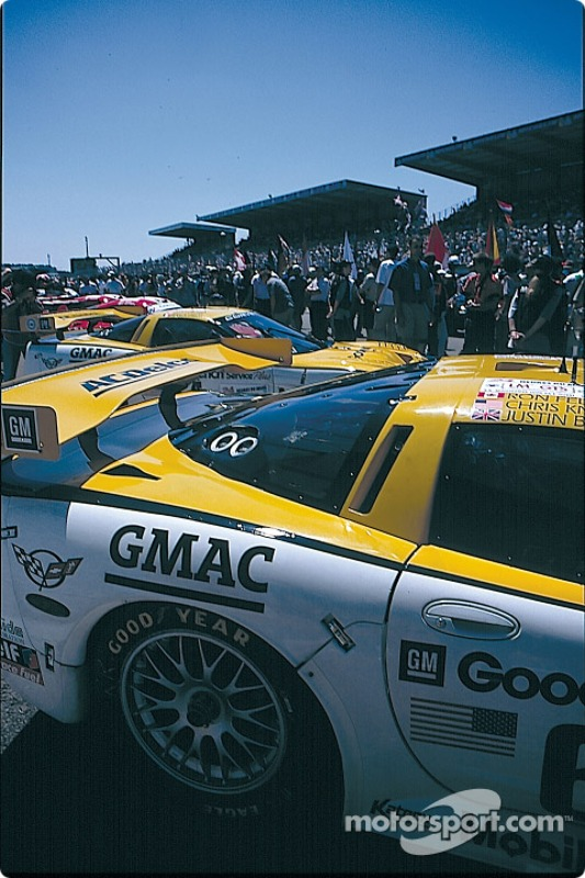 Corvettes on the  pre grid