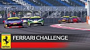 Ferrari Challenge Europe – Grossmann, Atoev and Scheltema win at Sochi